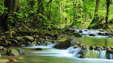 Mountain Small River Green Forest Dense Rock Stones Muir