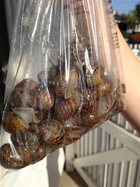 What to do with a bag of live snails? | tiffani goff at HOME