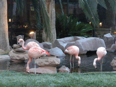 The 8 BEST Animal Attractions In Nevada